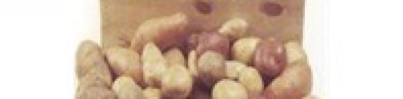 Machine de tri de pommes de terre